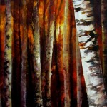 Sunset Birch 16x40 2013