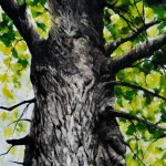 Old Tree Portrait
